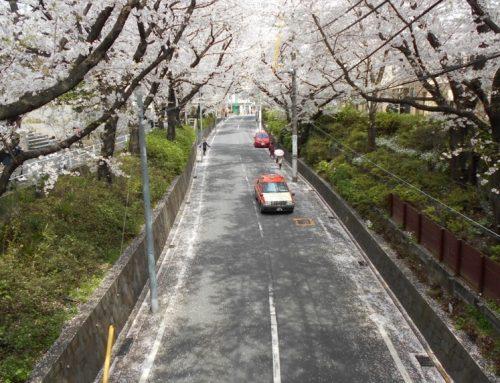 福山雅治さんの歌で有名な「桜坂」